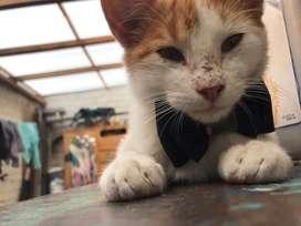 Gatito macho en adopcion