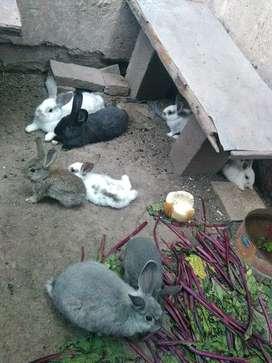 Conejos bebes
