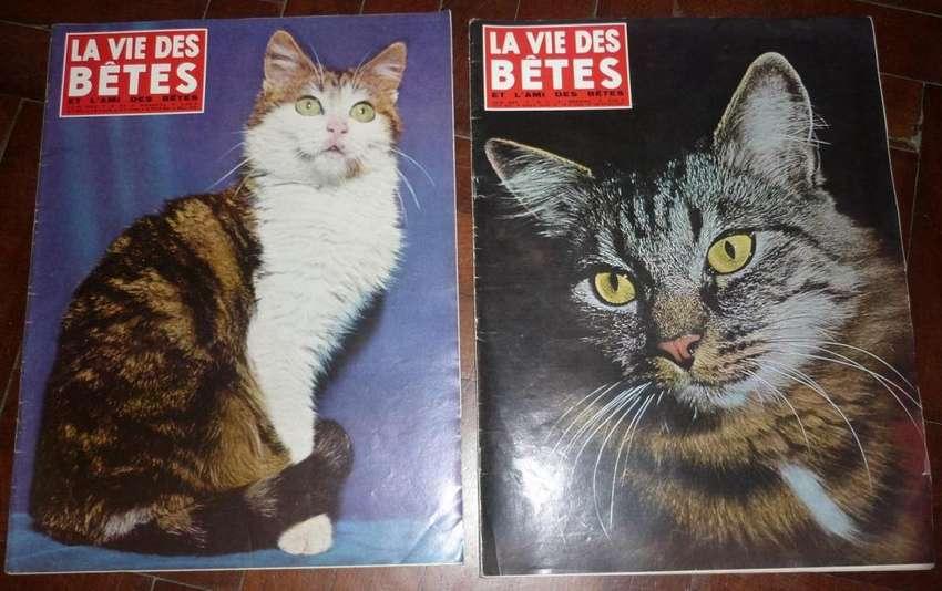 REVISTAS FRANCESAS LA VIE DES BETES 1964 TAPAS GATITOS GATOS ANIMALES 0