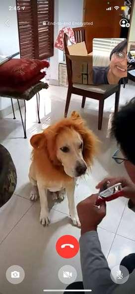 Disfraz de Leon para perro