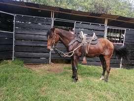 Vendos caballos