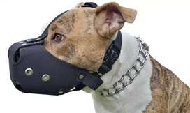 Bozal Perro Pitbull Bullterrier Comodos Fuertes Reglamento
