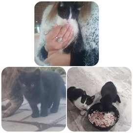 Se dan gatitos en adopción.