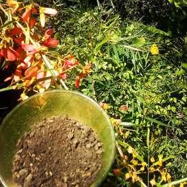 Humus de lombriz. Entorno orgánico. 4 kgs.