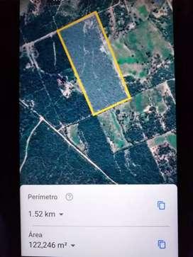 Vendo 12 hectáreas