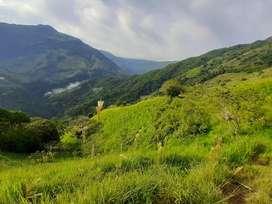 Vendo finca en Valdivia Antioquia