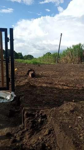 Venta de lotes rurales de 1300mts. Quimbaya planos cerca ala ciudad.