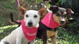 En adopcion perros: gaviota y paloma (criollas)