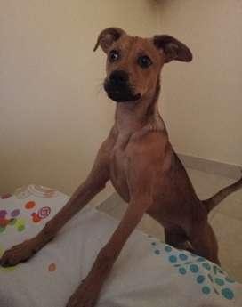 Adopción cachorra