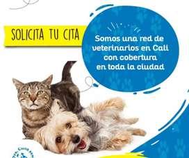 Ecografia veterinaria cali