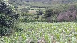 en Venta Tereeno en Vilcabamba Santorum