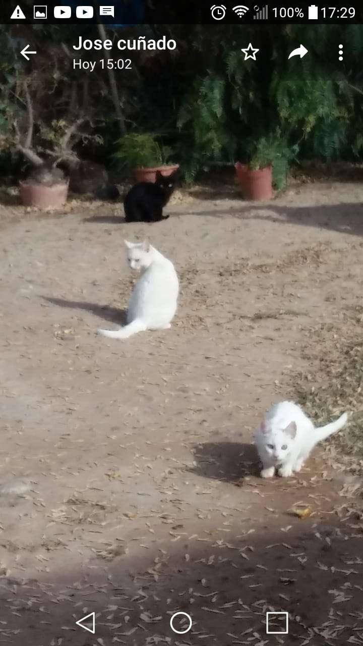 Se regalan gatos a personas responsables