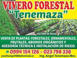 VIVERO VENTA DE PLANTAS DE TODO TIPO