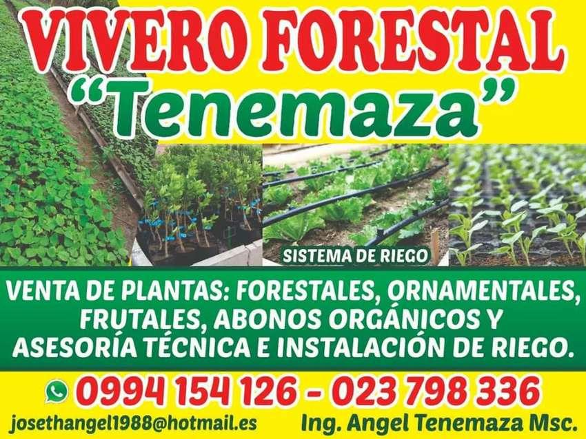 VIVERO VENTA DE PLANTAS DE TODO TIPO 0