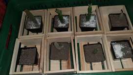 Cactus.precios.de.locura