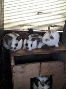 Lindos conejitos