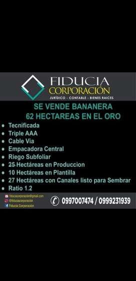 Bananera de 62 Hectareas en el Guabo
