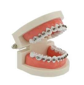 Modelo Dental Odontología