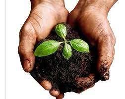 Tierra Negra para jardineria