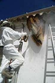 control de abejas oriente manejo de abejas la ceja