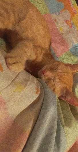 Se da en adopción esta gatita