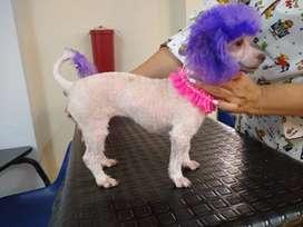 Servicio de peluquería canina en casa