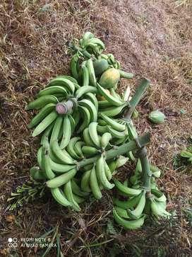 Plátano (verde)