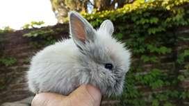 Los mejores conejos