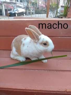 Conejos rex antialérgicos