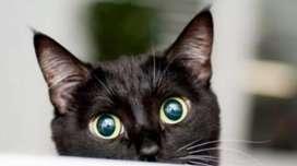 Adopto gato machito