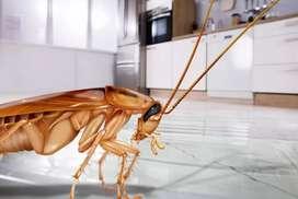 Cucarachas en cocinas, fumigacion residencial Bogota (PLAGAS INSECTOS PULGAS  ACAROS CHINCHES,)