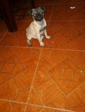 Cachorra de 4 meses 180