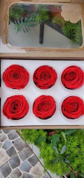 Rosas eternizadas