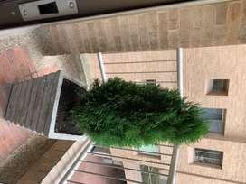 Materas en cemento con pinos y Eugenias