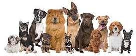 Pensionado para Perros en Haedo