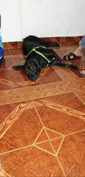 Doy en adopcion perrito de 5 meses