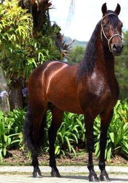 Venta de caballos excelente