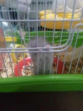 Hamstera con un hámsters y 4 crias