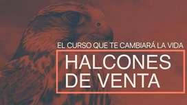 Halcones De Venta Curso Gold