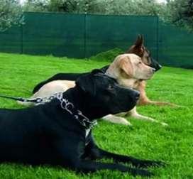 Obediencia básica clases de adiestramiento canino