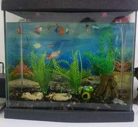 Acuario completo con 11 peces