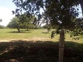 Venta de 8 hectáreas