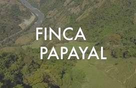 Finca ganadera ubicada en San Bartolome, Pacora  Caldas