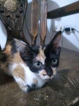 Lindas gaticas en adopción