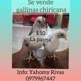 Pollos chiricanos
