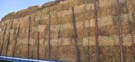 Venta de pacas de alfalfa frijol Arroz y Avena
