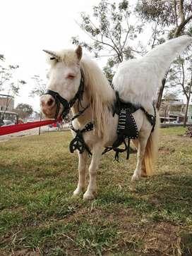 Alquiler de pony únicornio para exhibición
