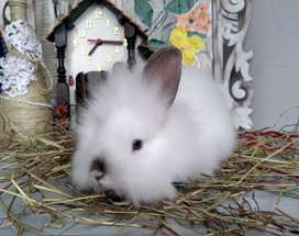 Conejos de todas las razas en Bogota