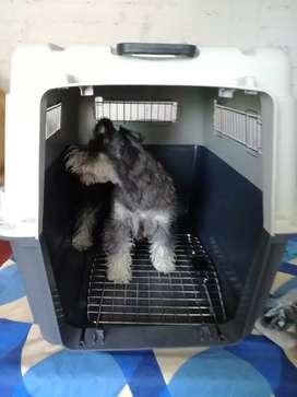 Kennel, canil L80 nuevo con ruedas, transportador para perros