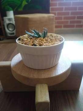 Maceta con soporte en madera